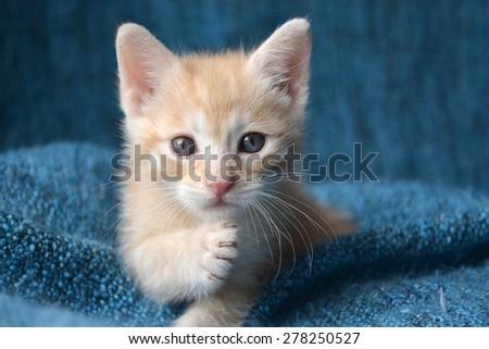 Orange tabby kitten, paw up looking at camera