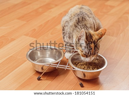 Orange tabby small cat eats from a bowl