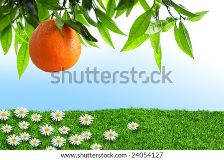 Orange-tree branch with one orange over grass field with flowers