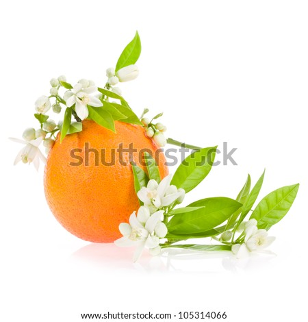 Orange tree flowers on a big  orange fruit isolated on white background - stock photo