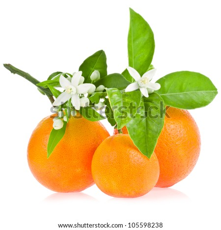 Orange tree flowers on a orange fruit isolated on white background