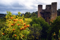 Orange trees and medieval tower in the gargens outside the Convent of Christ, ancient templar stronghold and monastery in Tomar, Portugal