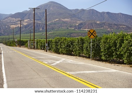 Orange Trees in California, U.S.A. Ventura, California. American Agriculture. Food Industry. - stock photo