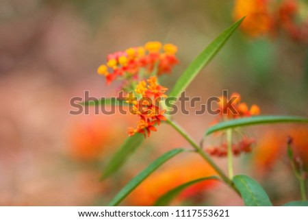 Orange tropical flower #1117553621