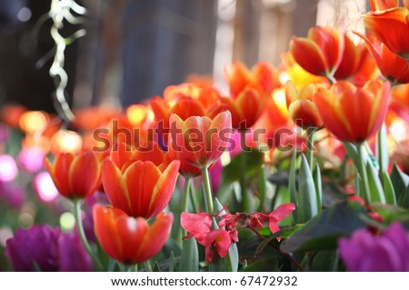 orange tulip flower and leaf with tulip background texture