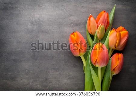 Orange tulips on the grey  background.