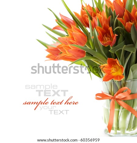 Orange tulips on white background (with sample text)