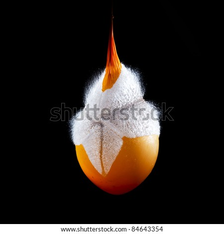 orange water balloon moments before explosion - stock photo
