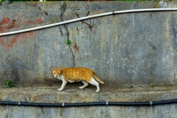orange-white cat walking cautiously along riverbed