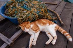 orange white sweet stray cat and fishing net