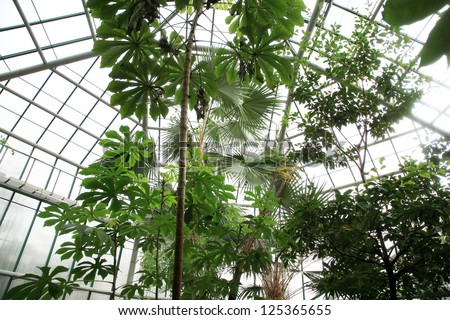 Orangery with tropical plants in Czech Republic, Liberec.