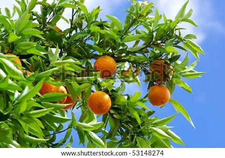 Oranges and blue sky.