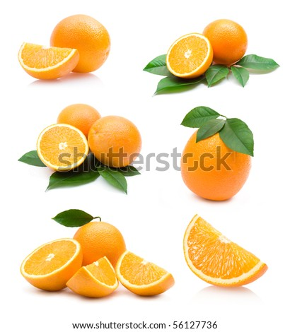 oranges collection - stock photo