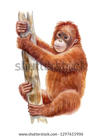 Orangutan. Realistic red monkey on treecolorful isolated on white background. Watercolor. Illustration. Template. Close-up. Clip art. Hand drawn. Painting