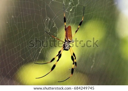 Orb Weaver Spider #684249745