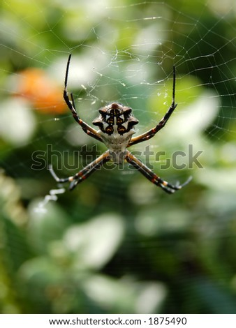 Orb Weaver with Writing on Web