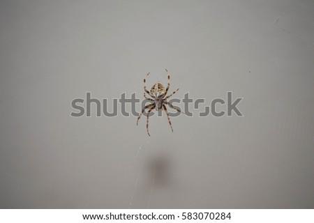 Orb Web Spider #583070284