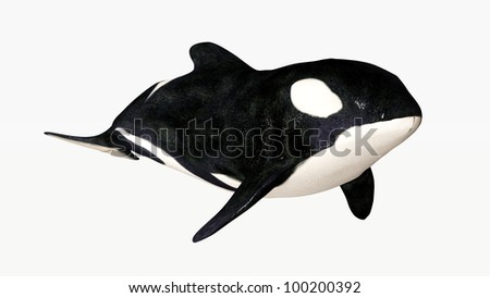 Orca Computer generated 3D illustration - stock photo