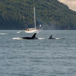 Orcas Boats