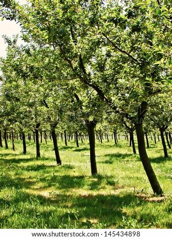 stock-photo-orchard-145434898.jpg
