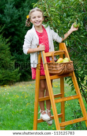 Orchard - lovely girl picking of tree ripe pears
