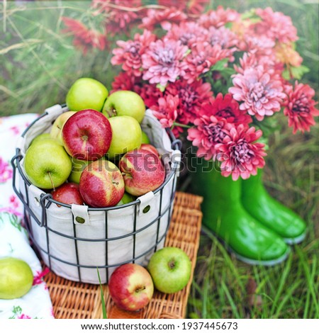 orchard with apples, basket with apples, shiny apples, bottom with orchard, orchard, apples, farm