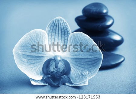 Orchid and black basalt for spa on green background