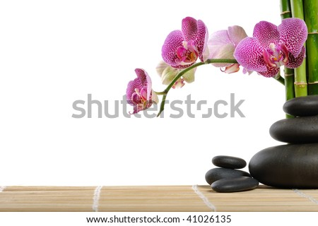 Orchid and stones - stock photo