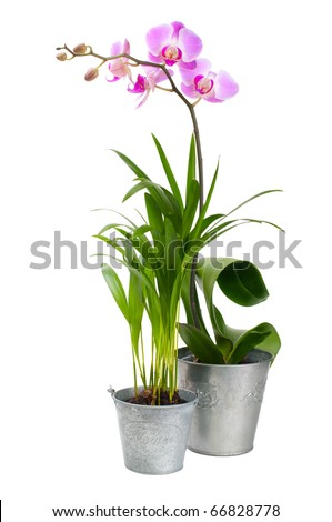 Orchid and tropical plant on a white background
