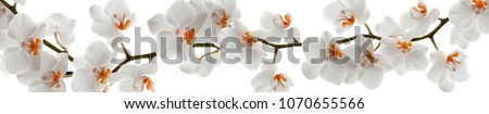 Orchid branch with flowers