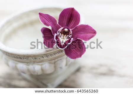 Orchid flower and green leaves background in garden.