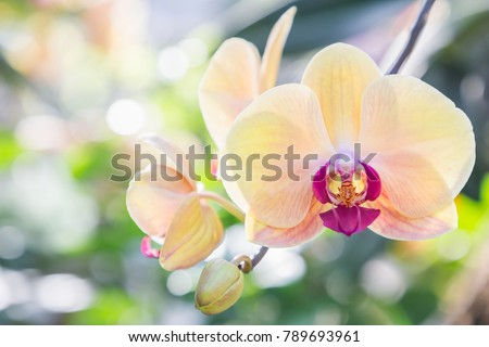 orchid flower in garden at...