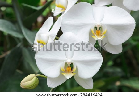 orchid flower in orchid garden...