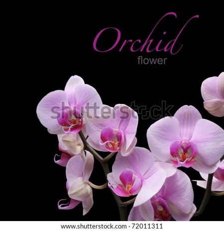 orchid flower on black