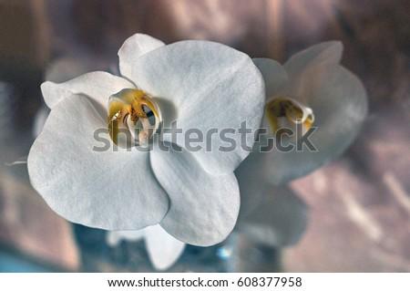 Orchid flowers                            Zdjęcia stock ©