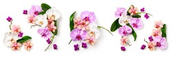 Orchid flowers and leaves collection isolated on white background. Flower arrangement. Floral design. Top view, flat lay