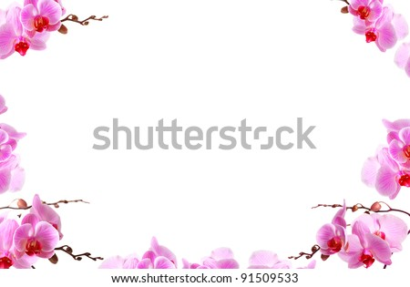 Orchid flowers border with white copy space - stock photo