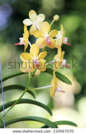 Orchid flowers in the garden