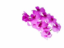 Orchid flowers on a white background
