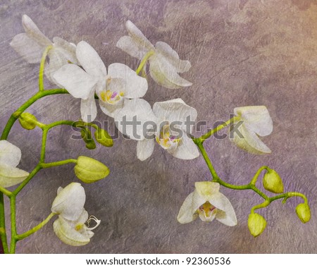 orchid flowers with art texture