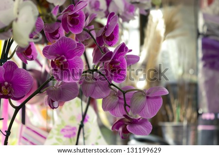 ORCHID FOR SALE IN SHOP OF FLOWERS AND DECOR - DETAIL - Valentine\'s Day, Mother\'s Day - gift
