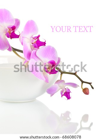 Orchid in a white bowl on a white background