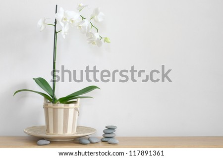 Orchid in pot and stones on table against light wall.