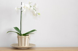 Orchid in pot on table against light wall.