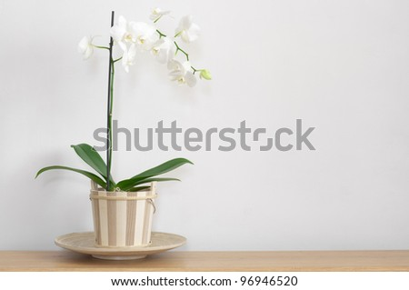 Orchid in pot on table against light wall. #96946520