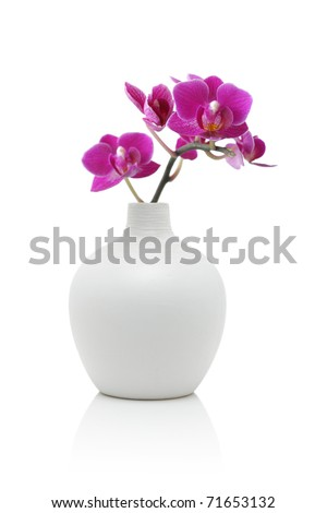 Orchid in white vase, isolated on white #71653132