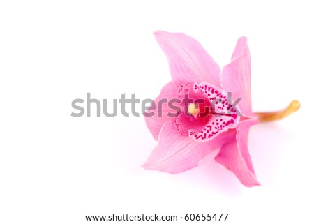 orchid isolated