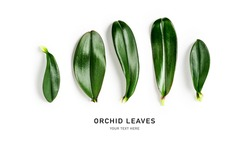 Orchid leaves creative banner and layout isolated on white background. Floral composition with tropical jungle green leaves. Nature and environment concept. Top view, flat lay, copy space