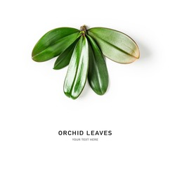 Orchid leaves creative composition and layout isolated on white background. Floral arrangement with tropical jungle green leaves. Nature and environment concept. Top view, flat lay, copy space