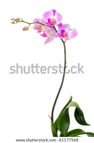Orchid on a white background #65177968